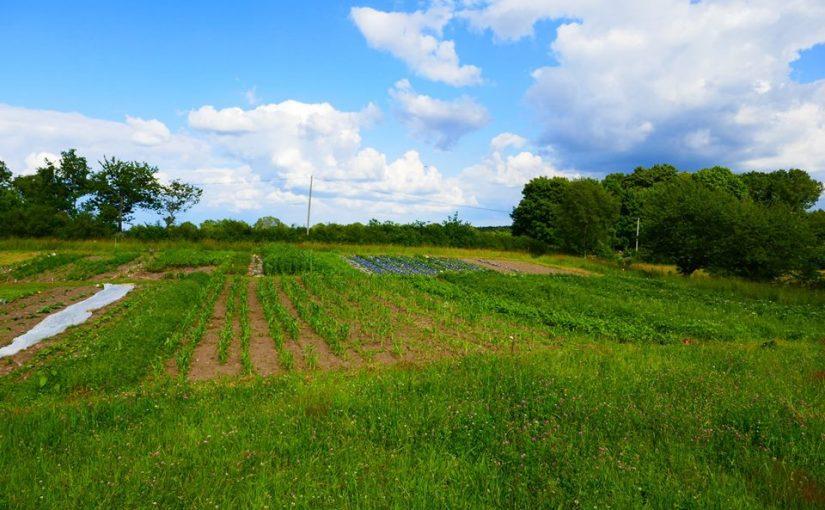 2000 kvm grönsaker – kurs genom Holma