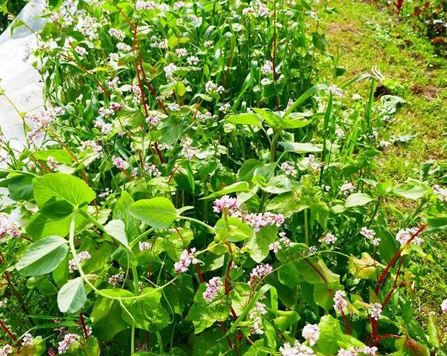 Alléodling och agroforestry – Söndag 12/8 13:00 – 16:00
